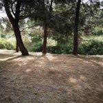 ΣΠΑΥ καθαρισμός ξερά χόρτα