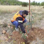 ΣΠΑΥ 365 δέντρα Υμηττό Γλυφάδα