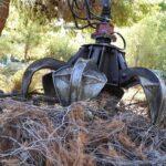 δαγκάνα αρπάγης ξερά κλαδιά