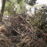 συγκεντρωμένα ξερά κλαδιά έτοιμα για περισυλλογή