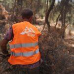 εργάτης από το συνεργείο του ΣΠΑΥ με γιλέκο του ΣΠΑΥ συγκεντρώνει τα ξερά κλαδιά με σκοπό να τα πάρει η αρπάγη